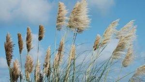 El aire, una mezcla indispensable para los seres vivos