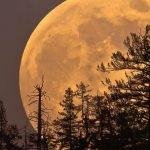 Luna Rosa de Abril