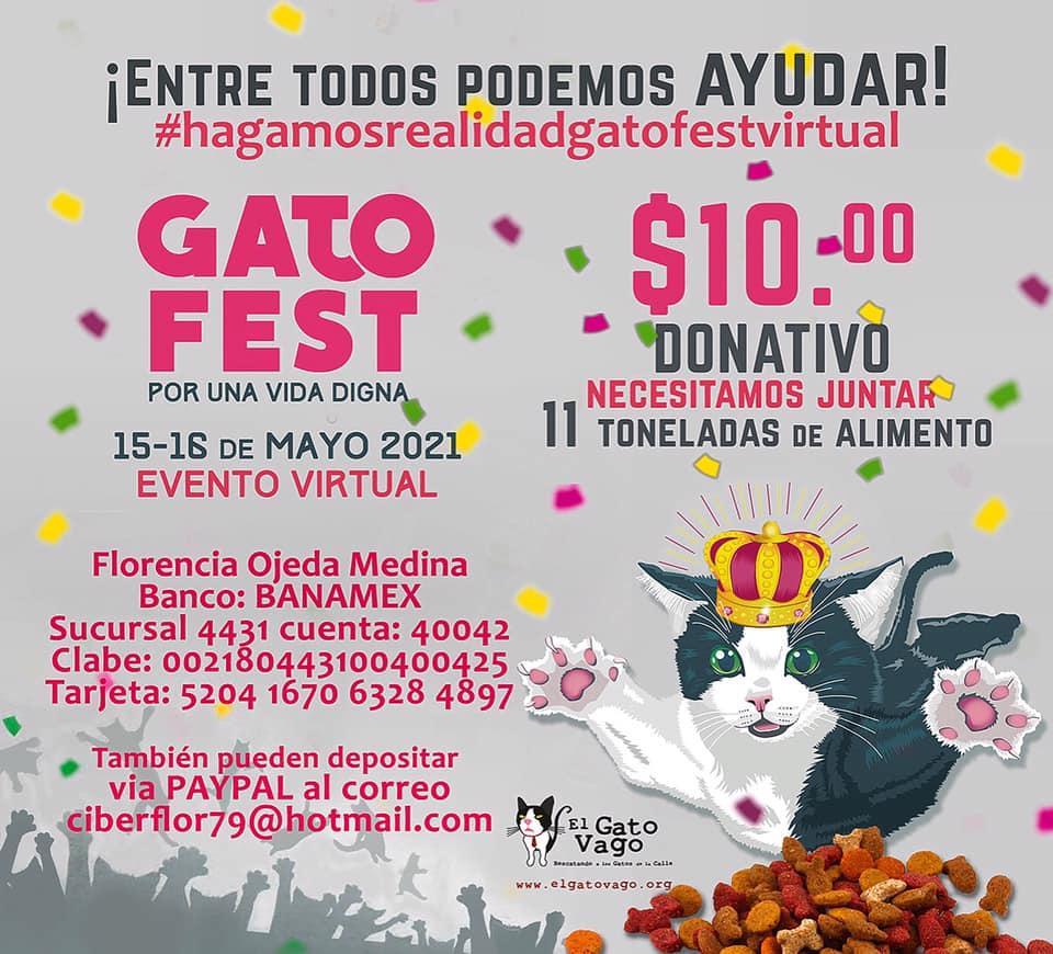 GATO FEST 2021