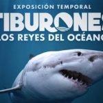 """""""Tiburones, Los Reyes del Océano"""" en Acuario del Bajío: Costo y horario Foto: Especial"""