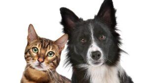 4 de octubre dia mascotas animales