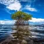 biodiversidad ecosistemas